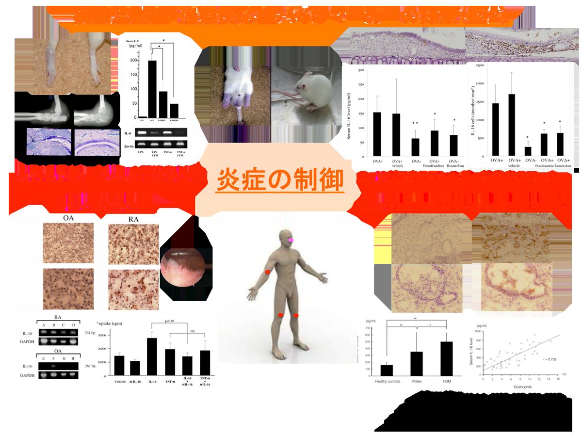 g_immunology003